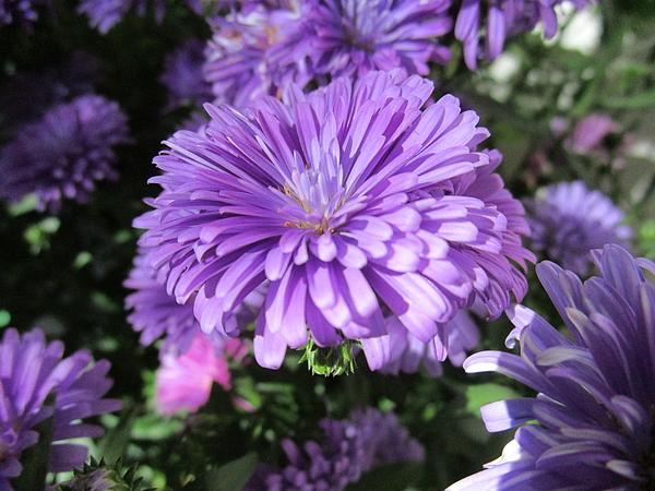 Rosita Larsson - Casual in purple