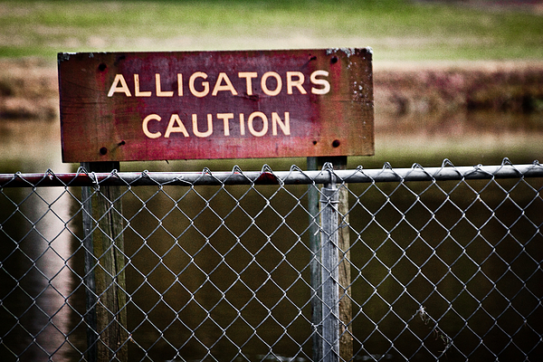Erik Hovind - Caution Alligators