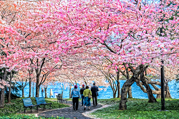 Keith Yates - Cherry Blossoms At The Tidal Basin