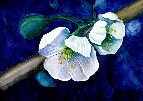 Cherry Blossoms Print by Georgia Pistolis