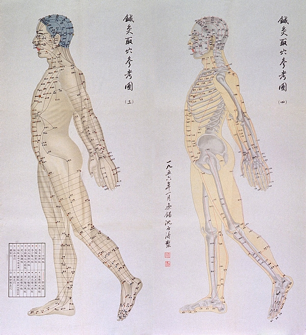Chinese Chart Of Acupuncture Points Print by Everett