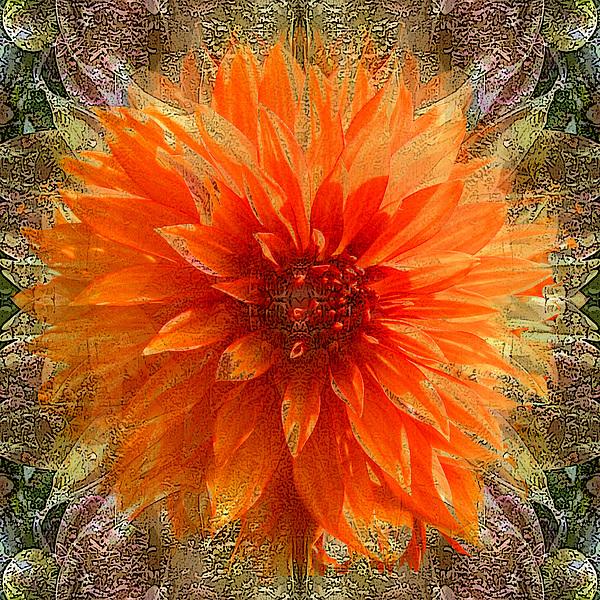 Chrysanthemum Print by Tom Romeo
