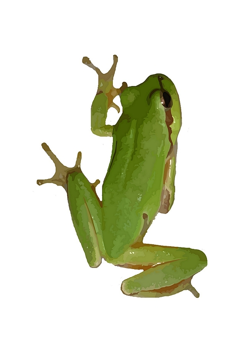 Tree Frog Climbing