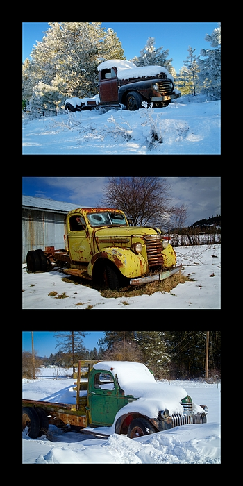 Cold Guys Print by Idaho Scenic Images Linda Lantzy