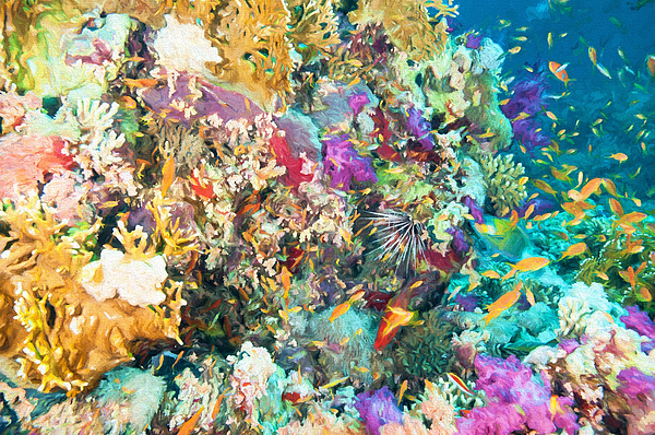 Colorful Coral Reef by Roy Pedersen