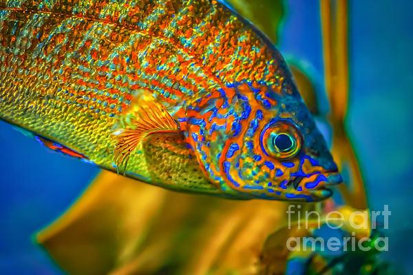 Mitch Shindelbower - Colorful Fish
