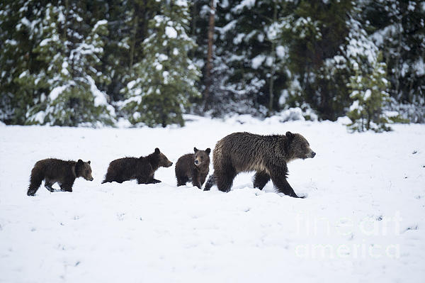 Sandra Bronstein - Come Along - Grizzly Family