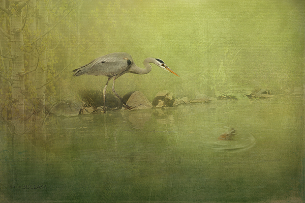 Come Hither Print by Reflective Moment Photography And Digital Art Images