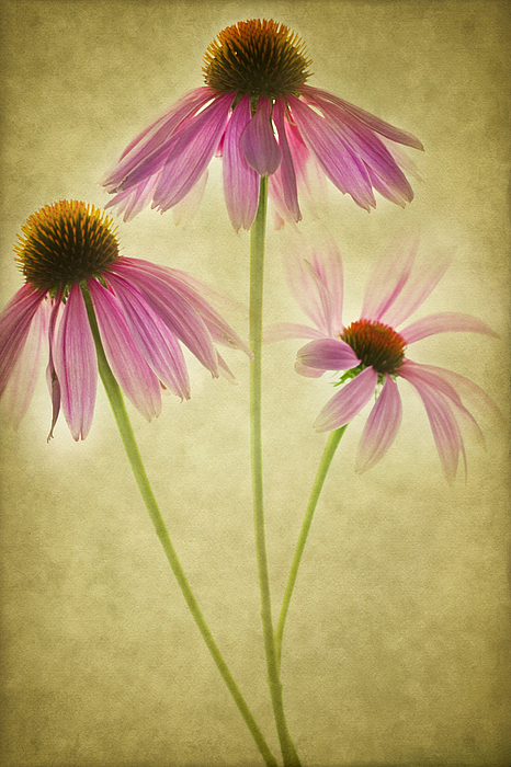 Cone Bouquet Print by Rebecca Cozart