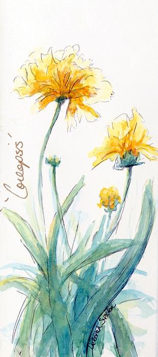 Coreopsis Print by CheyAnne Sexton