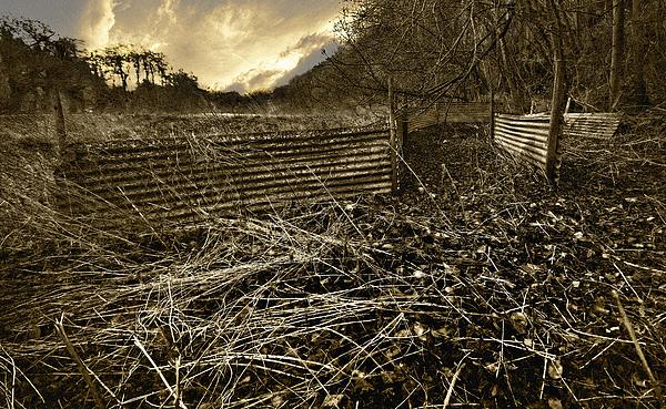 Corrugated Tin Pen Print by Meirion Matthias