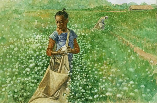 Cotton Field Print by Robert Casilla