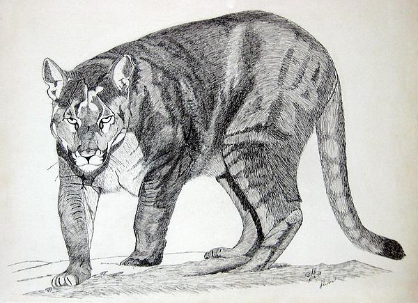 Cougar Print by Daniel Shuford