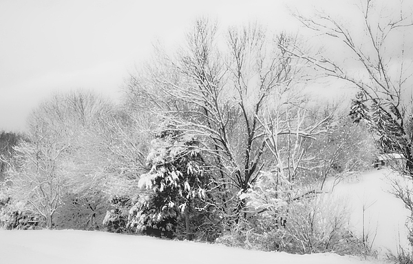 Country Winter Print by Kathy Jennings