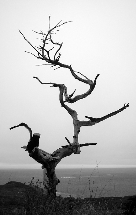 Crooked Tree Print by Matt Hanson