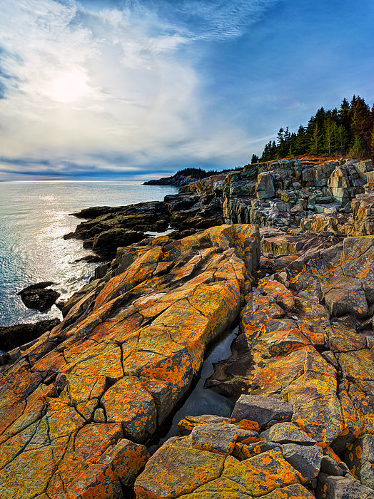 Cutler Coast Lichen Print by Bill Caldwell -        ABeautifulSky Photography