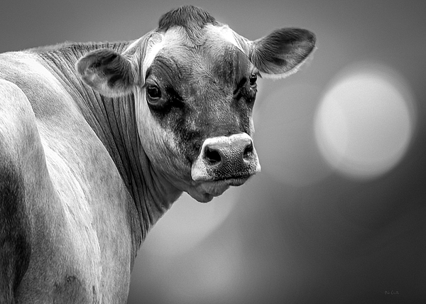 Dairy Cow Elsie Print by Bob Orsillo