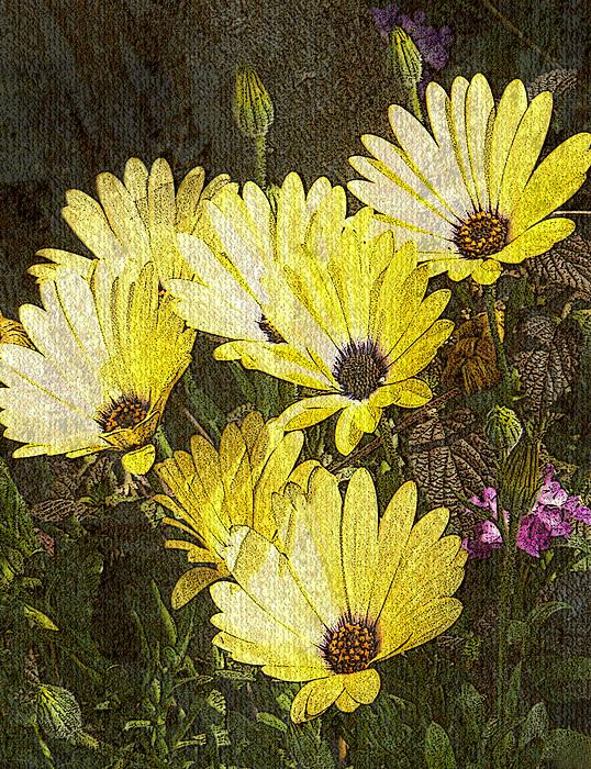 Daisy Daisy Print by Tom Romeo