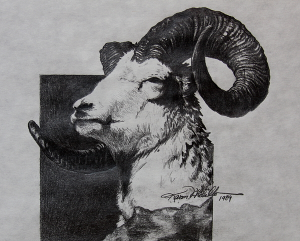 Dall Ram Print by Karon Melillo DeVega