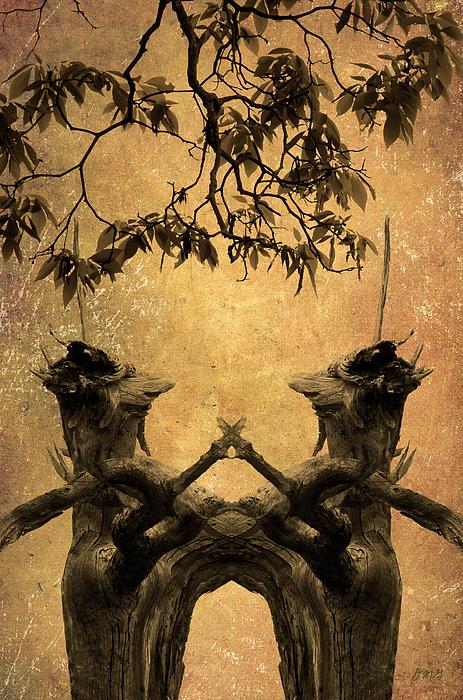 Dancing Trees Print by Dave Gordon