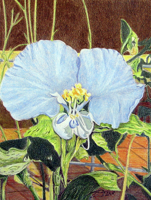 Day Flower Print by Beverly Fuqua
