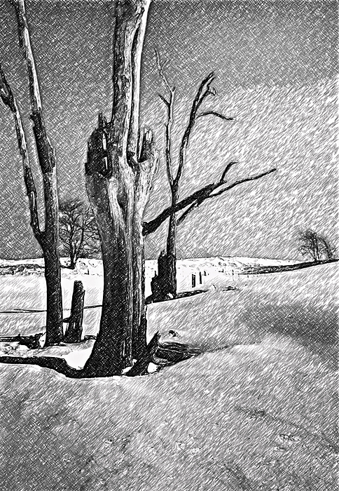Dead Of Winter Print by Steve Harrington