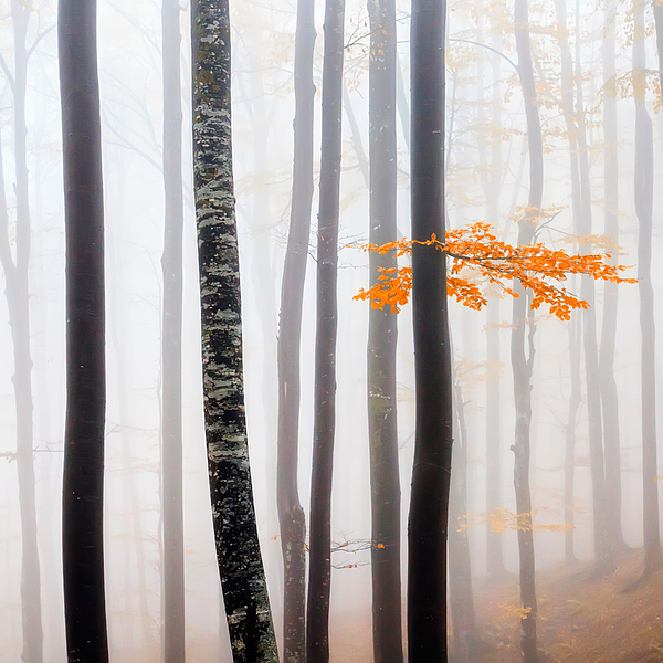 Delicate Forest Print by Evgeni Dinev