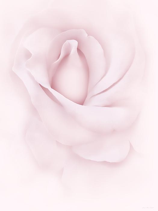 Jennie Marie Schell - Delicate Pink Rose Flower