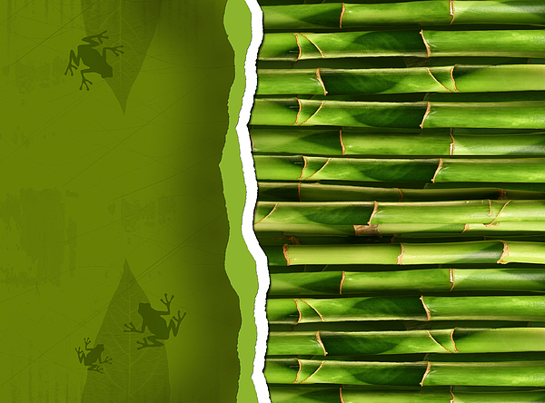 Dense Bamboo Stalk With Copyspace Print by Sandra Cunningham