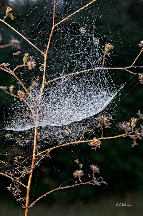 Dew Drenched Print by Christopher Holmes