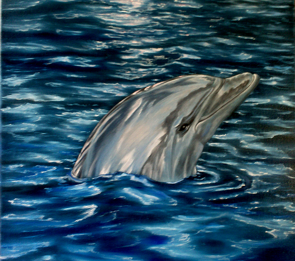 Dolphin Curiosity Oil Painting Print by Avril Brand