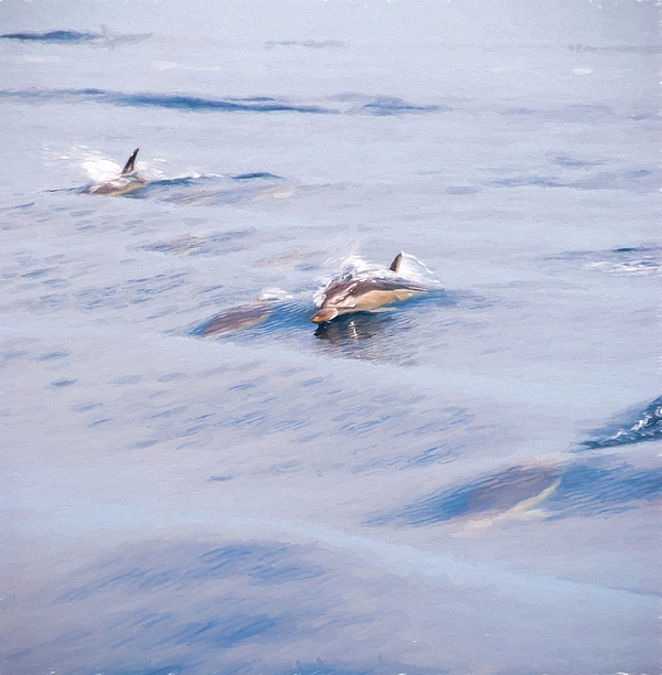 images of dolphins playing - photo #43