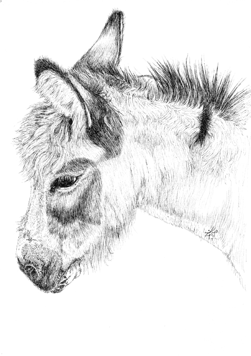 Donkey 2 Print by Keran Sunaski Gilmore