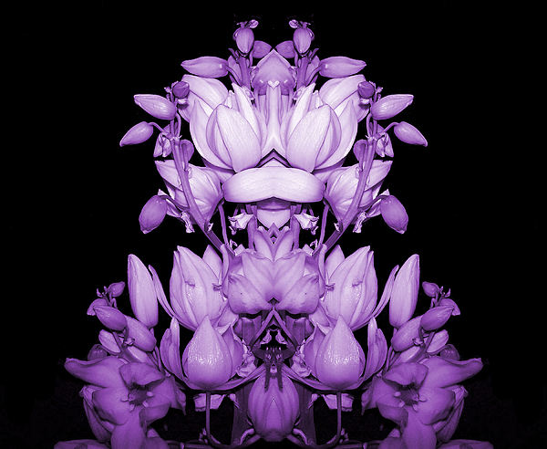 Double Purple Print by Evelyn Patrick