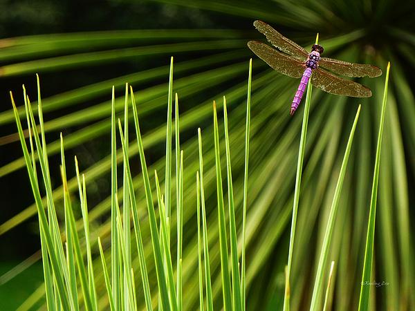 Xueling Zou - Dragonfly
