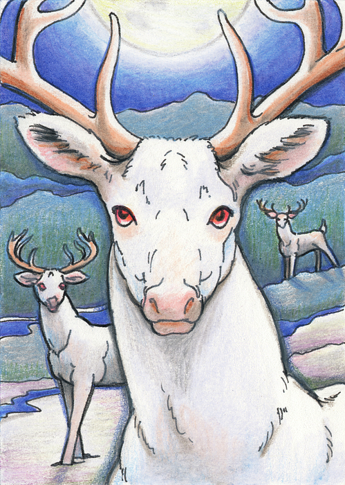 Dream Of The White Stag Print by Amy S Turner