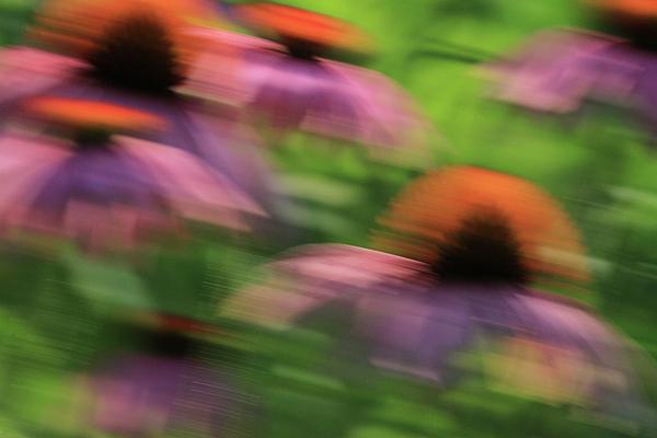Dreaming Of Flowers Print by Karol  Livote