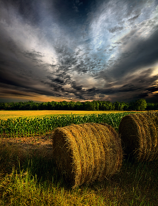 Drought Print by Phil Koch
