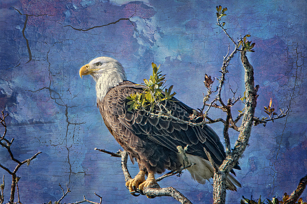 Eagle In The Eye Of The Storm Print by Bonnie Barry
