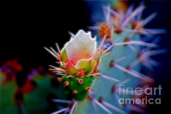 Berta Keeney - Electric Cactus Rose