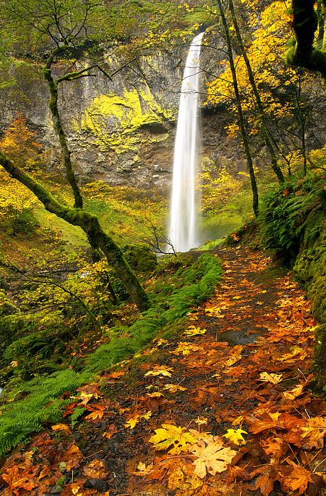 Elowah Autumn Trail Print by Mike  Dawson
