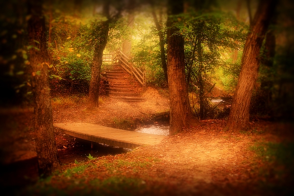 Enchanted Path - Allaire State Park Print by Angie Tirado