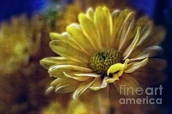 Ella Kaye Dickey - Encounter Floral Contemporary Art #703