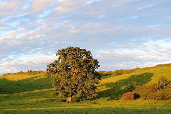 Rumyana Whitcher - English Countryside