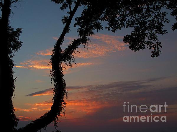 Ann Horn - Evening Sun