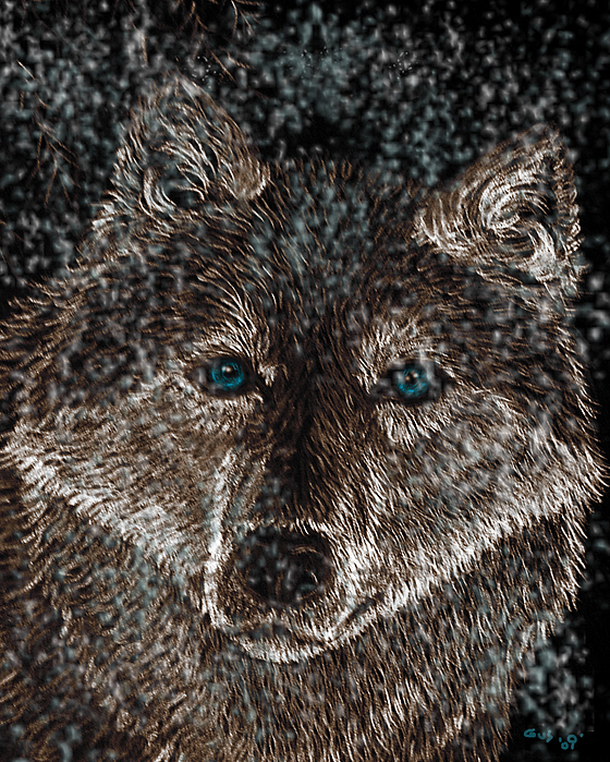 Eyes Of The Snow Wolf Print by Nick Gustafson