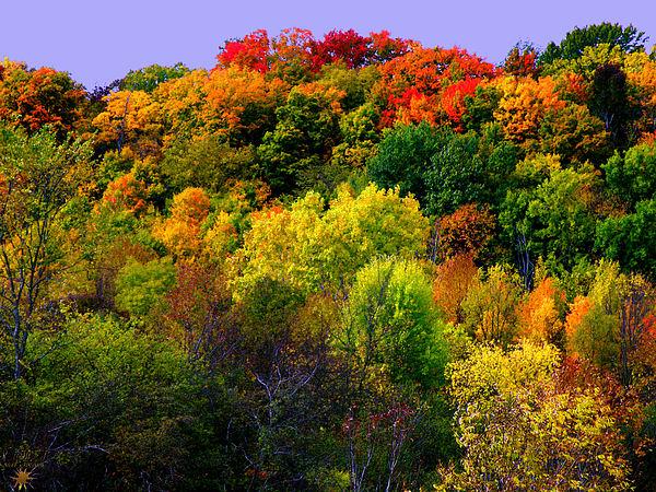 Scott Hovind - Fall Colors