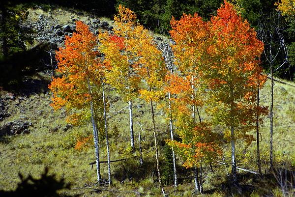 Fall In Colorado Print by Marty Koch