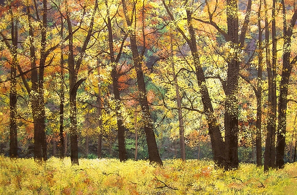 Fall Oaks In El Capitan Meadow Yosemite National Park Print by Connie Tom