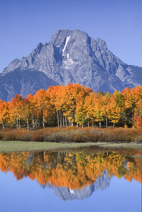 Fall Reflection At Oxbow Bend Print by Sandra Bronstein